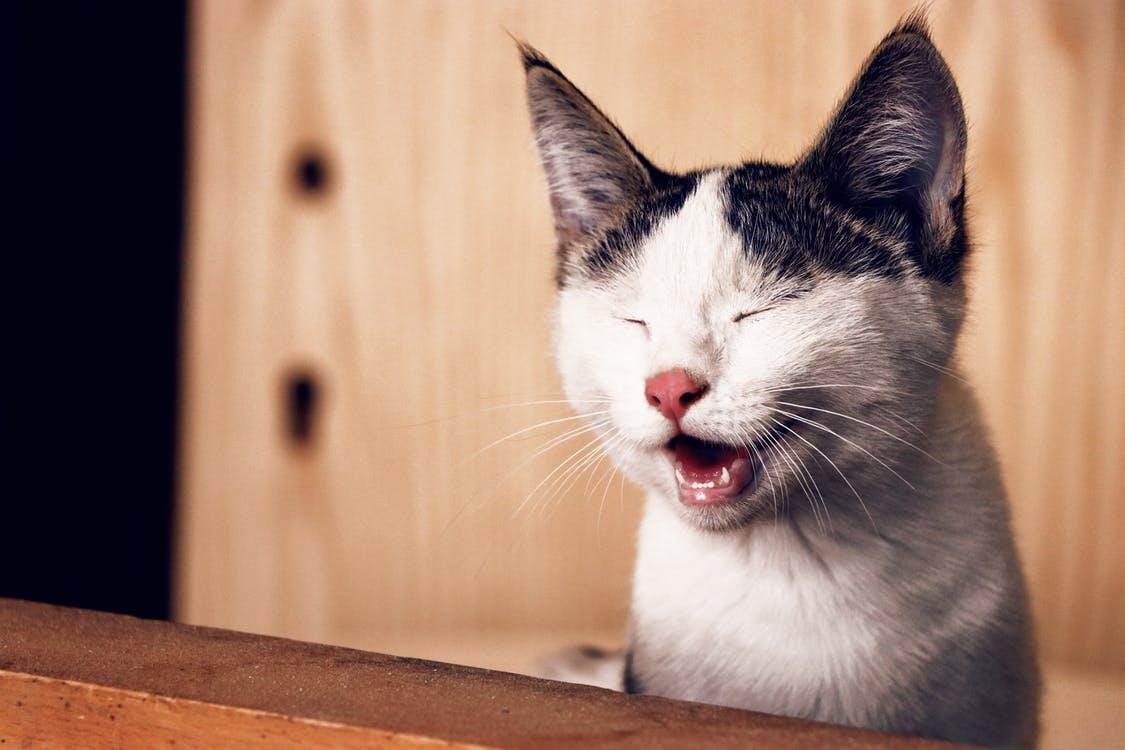 katt åt skämt